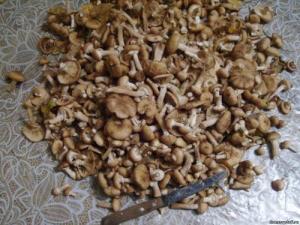 Подготавливаем грибы фото | Подготавливаем грибы