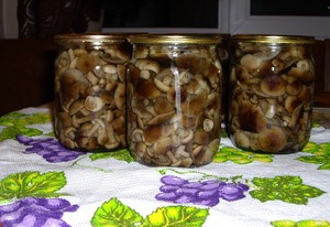 Заготавливаем маринованные грибы на зиму фото | Заготавливаем маринованные грибы на зиму